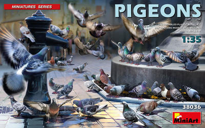 Pigeons - holubi - 1