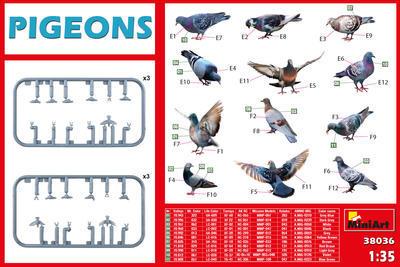 Pigeons - holubi - 2