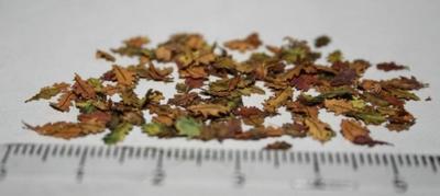 Listy Dub podzim 1:35 200ks - 2